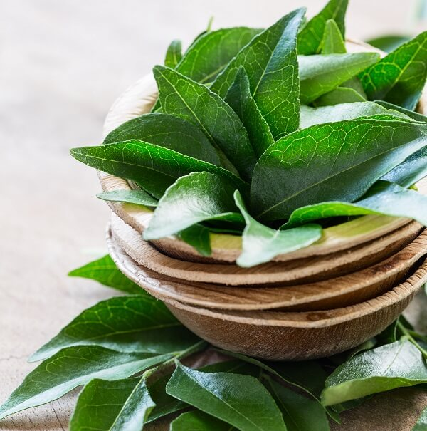 Curry Leaves - Natural Herbs - pristine organics blog-1