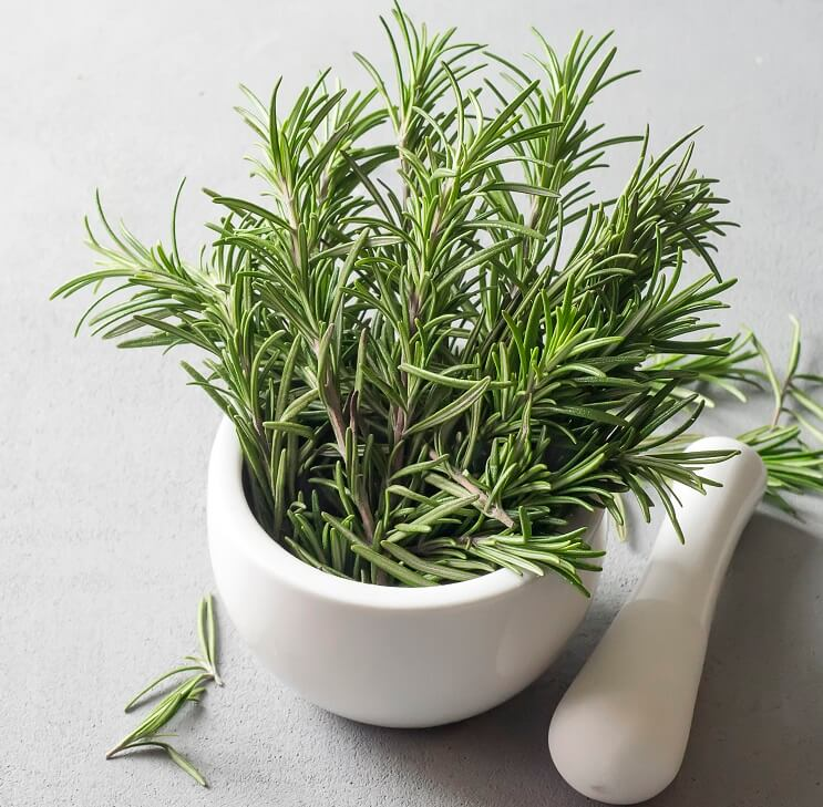 Rosemary - Natural Herbs - pristine organics blog-1